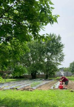 Urban Gardens at the Mayes Temple locations